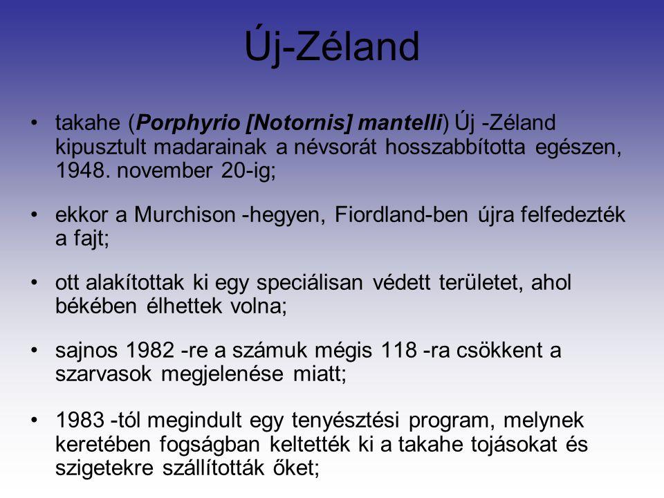 Új-Zéland takahe (Porphyrio [Notornis] mantelli) Új -Zéland kipusztult madarainak a névsorát hosszabbította egészen, 1948. november 20-ig;